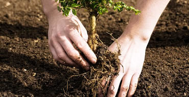 tree-planting-service-ohio
