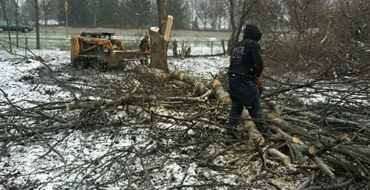 tree-trimming-tree-removal-service-ohio