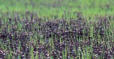 lawn-seeding-ohio